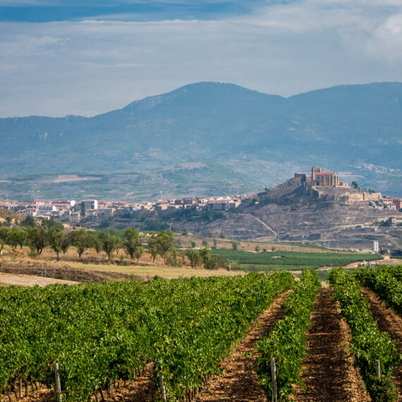 Spain travel photography: Vineyards and landscape seen from Bodega Vivanco in Briones, Spain.