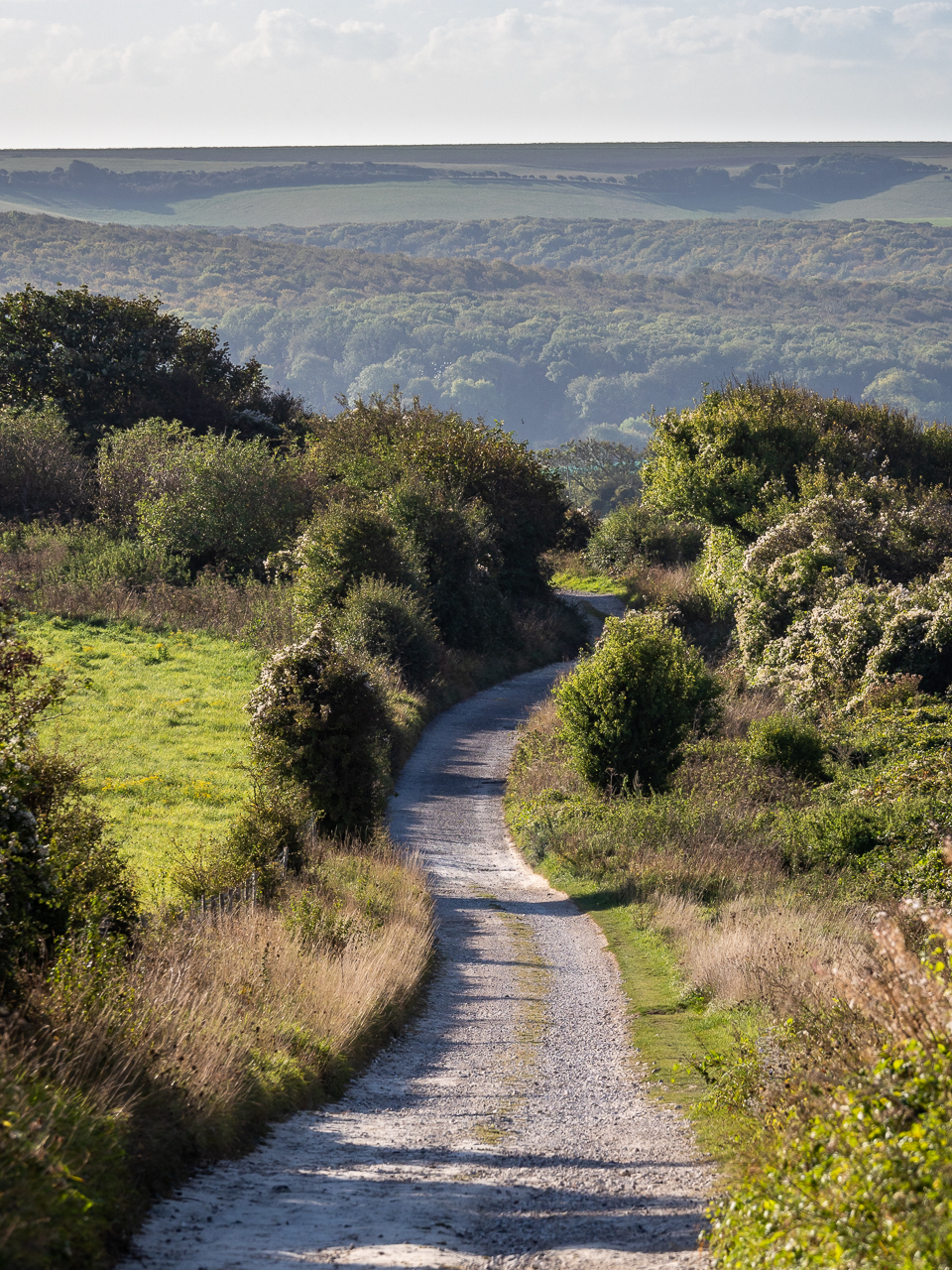 A South Downs Way track near Firle Beacon, a hill in East Sussex, England.